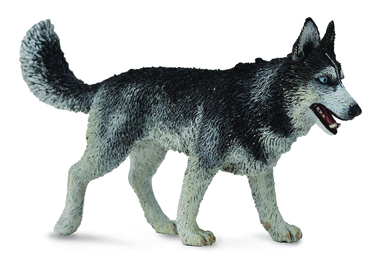 سگ هاسکی سیبری |