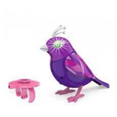 پرنده دی جی برد, image 2