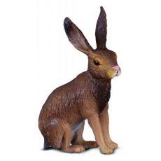 خرگوش صحرایی, image 1