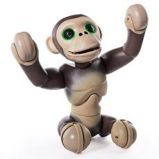 شامپانزه زومر, image 4