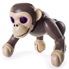 شامپانزه زومر, image 5