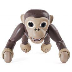شامپانزه زومر, image 6