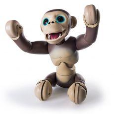 شامپانزه زومر, image 2