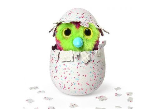 هچیمال فبیولا فارست تایگرت (یکی از دو رنگ بصورت اتفاقی داخل تخم است), image 2