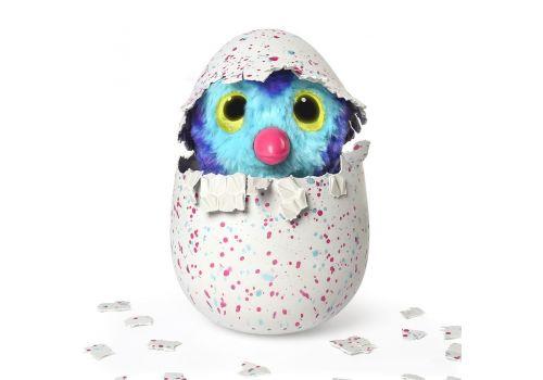 هچیمال فبیولا فارست تایگرت (یکی از دو رنگ بصورت اتفاقی داخل تخم است), image 6