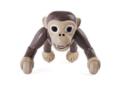 شامپانزه زومر, image 7