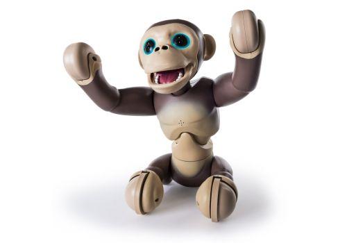 شامپانزه زومر, image 3